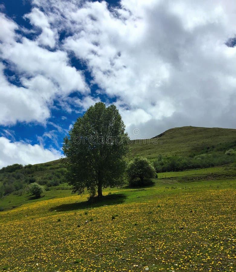 Één solitaire boom groeide op de berghelling stock afbeelding