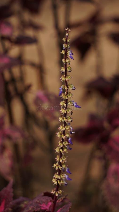 Één stok met veelvoudige Bloemen stock afbeeldingen
