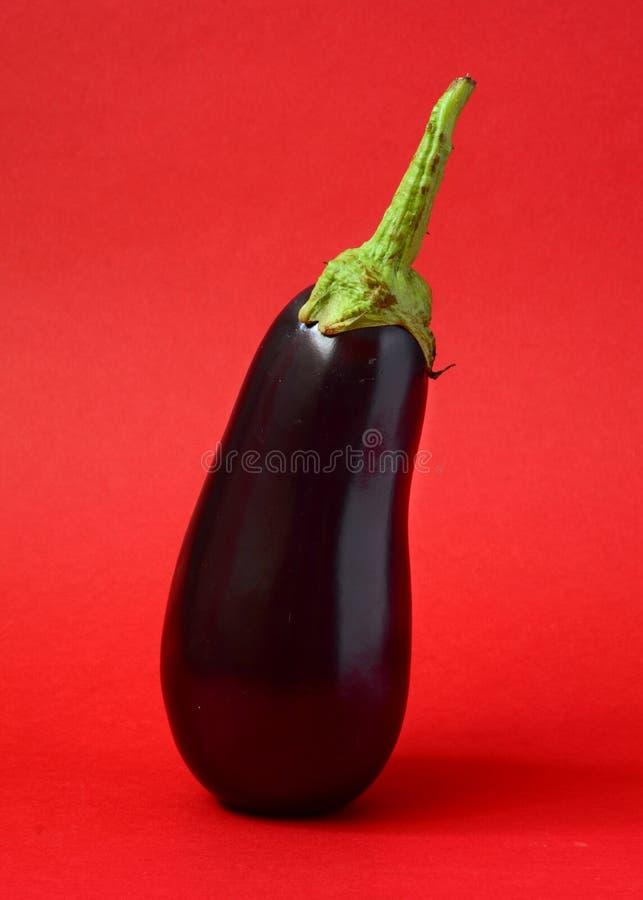 Één verse aubergine stock foto