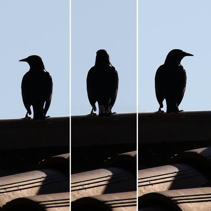 Één vogel staart in verschillende richtingen royalty-vrije stock fotografie