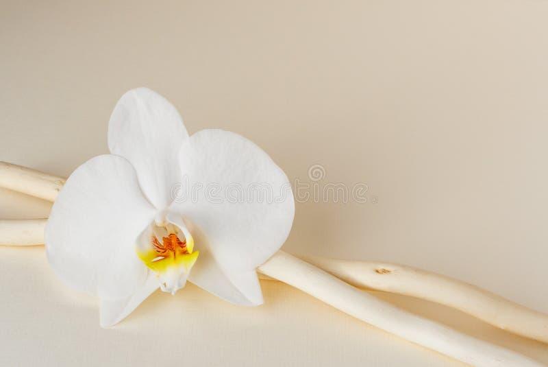 Één zachte orchidee van witte kleur en twee stokken op een beige document achtergrond royalty-vrije stock foto's