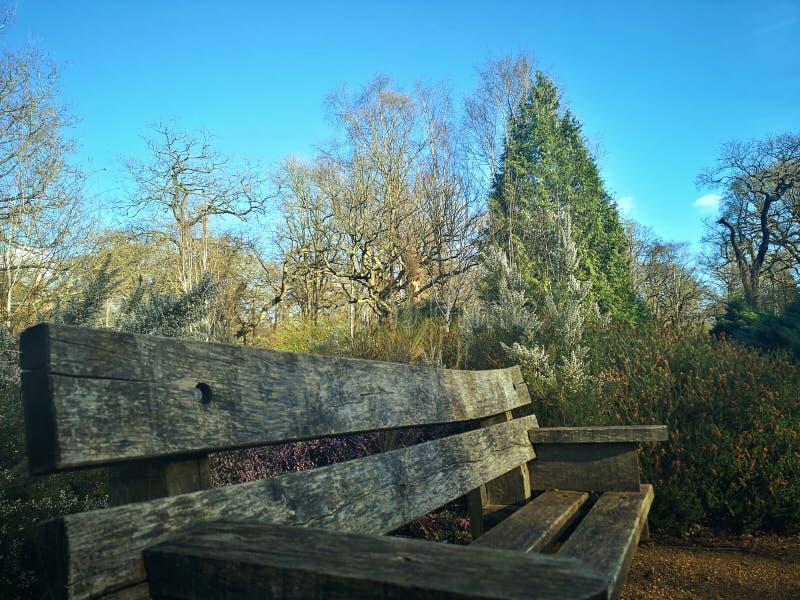 里士满公园,伦敦,英国 免版税库存图片