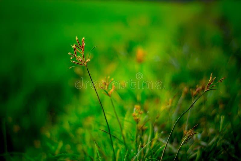 野生植物在小径增长 免版税图库摄影
