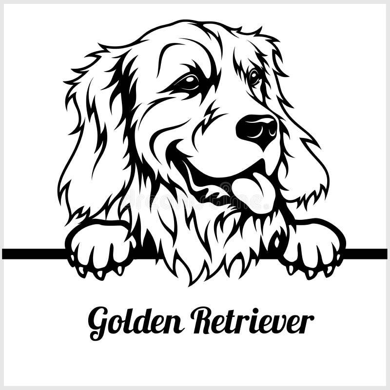 金毛猎犬-偷看狗- -品种在白色隔绝的面孔头 向量例证