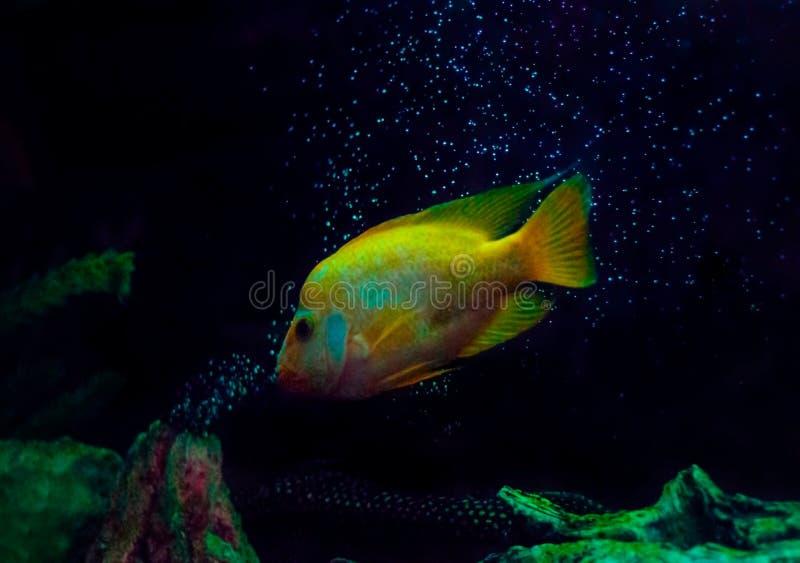 金鱼,所有的艺术照片 库存图片