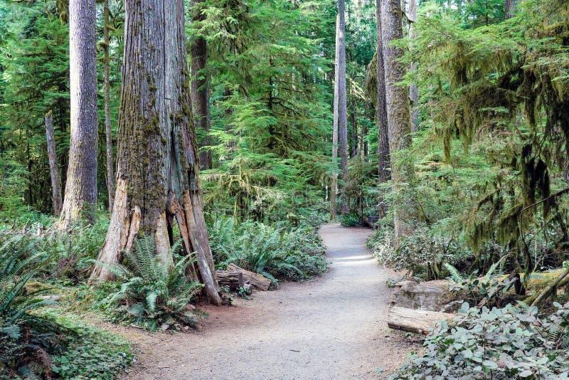 雨林在奥林匹克国立公园,华盛顿,美国 免版税库存照片