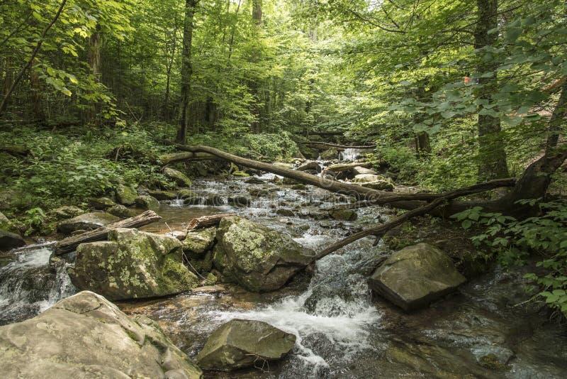 雪伦多亚森林小河 免版税库存照片