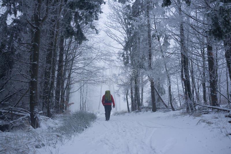 雪道在一点喀尔巴阡山脉在寒冷冬天早晨 库存图片