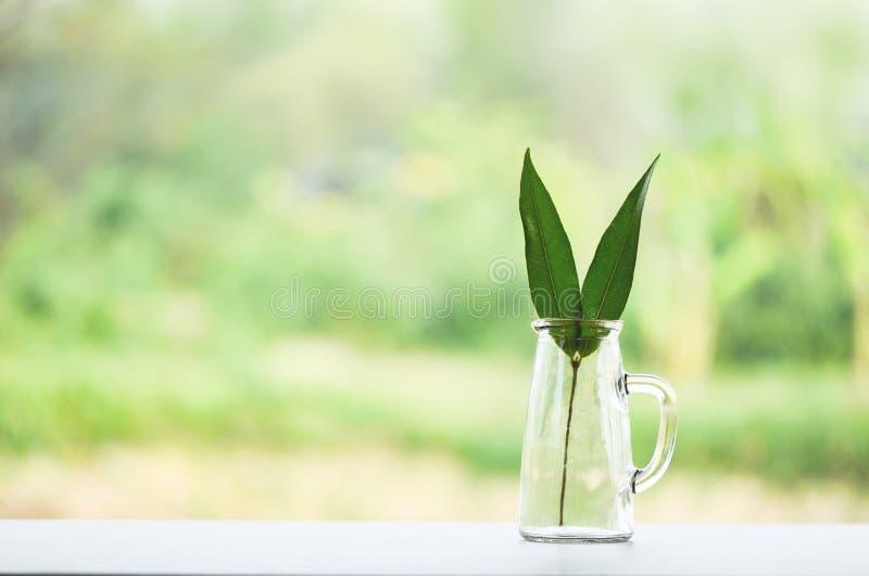零的废物在玻璃在自然环境的雀鳝自由塑料使用较不塑料概念/eco绿色叶子 免版税库存照片