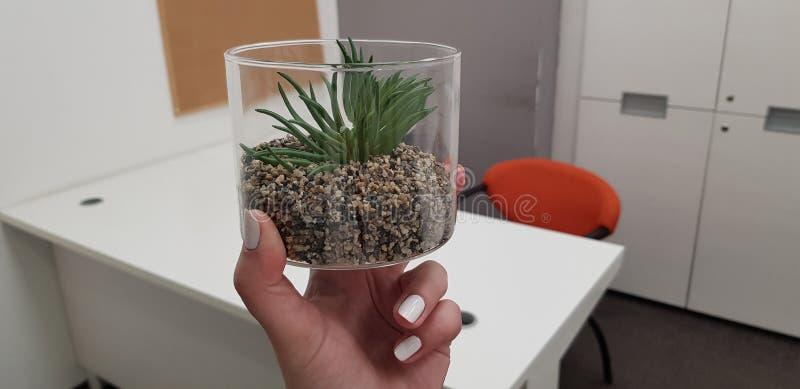 透明塑料罐头的人为多汁植物在空的办公室室的女性手指 免版税库存照片