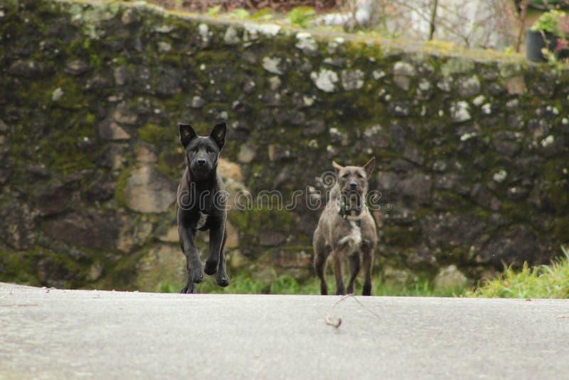 逗人喜爱的黑和灰色狗 免版税库存照片