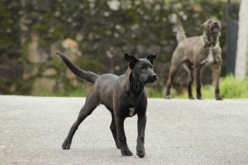 逗人喜爱的黑和灰色狗 免版税库存图片