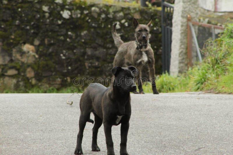 逗人喜爱的黑和灰色狗 免版税图库摄影