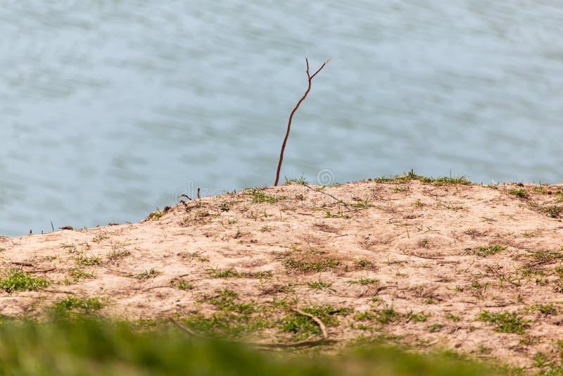 钓鱼竿的棍子在河岸 库存图片