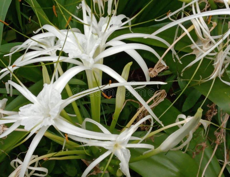 É flor branca imagem de stock