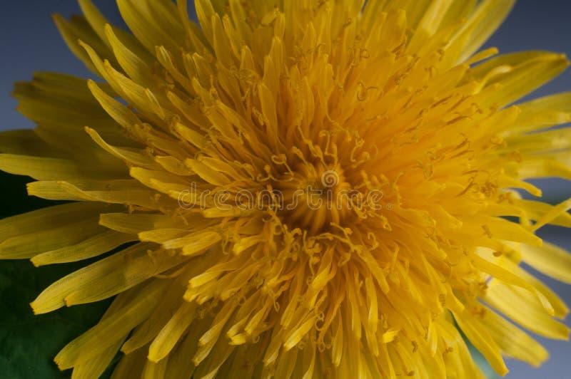 É flor muito bonita fotografia de stock