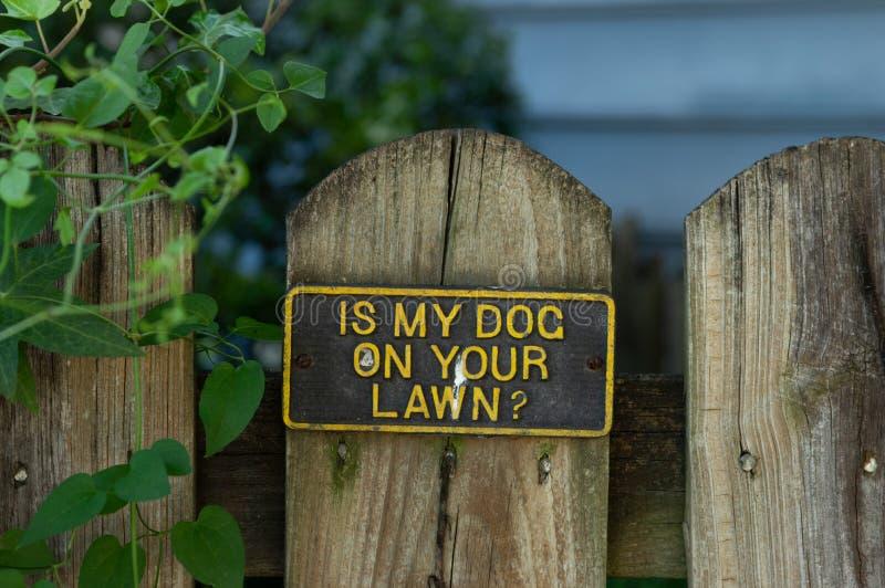 É meu cão em seu gramado fotos de stock