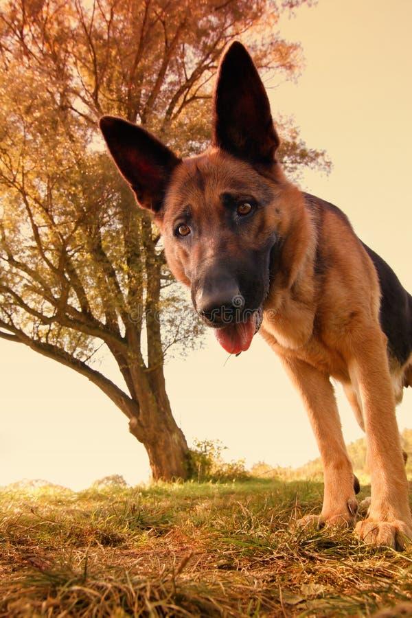 É mim - cão fotografia de stock