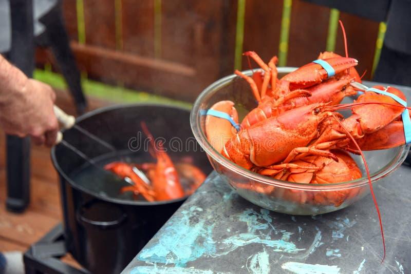 Ébullition de homard dans l'arrière-cour images libres de droits