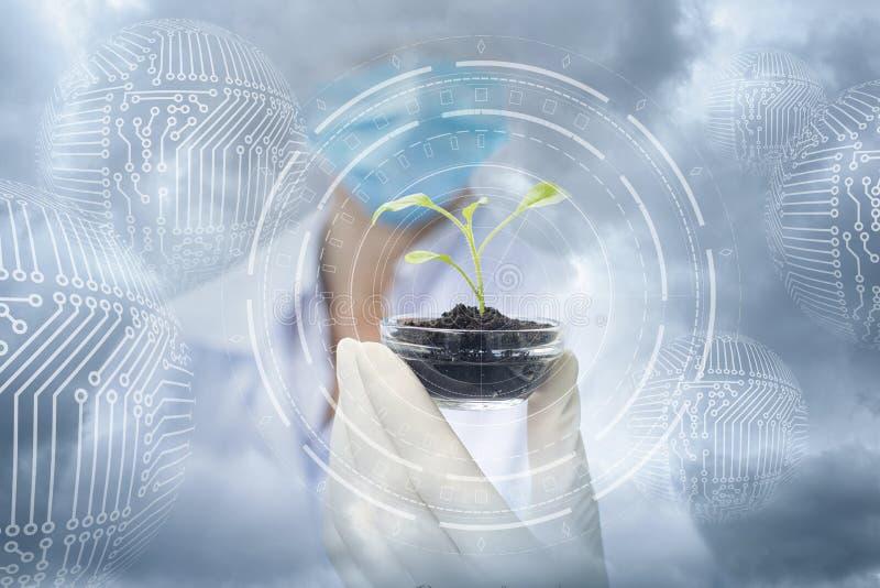 Échantillon d'une usine dans les mains d'un spécialiste contre le ciel photo libre de droits