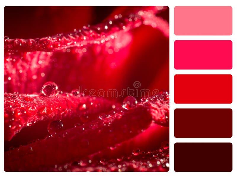 Échantillon de palette de couleur photos libres de droits