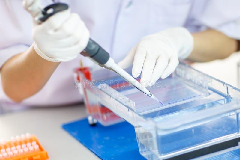 Échantillons de chargement dans le gel pour l'électrophorèse images libres de droits