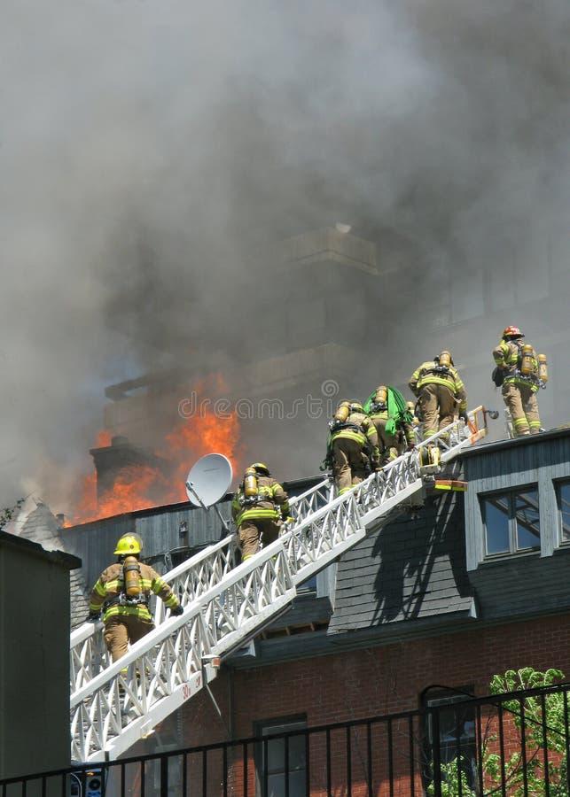 échelle de sapeurs-pompiers photographie stock libre de droits