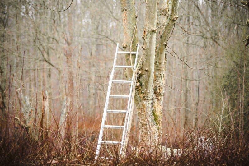 Échelle en métal dans un arbre en automne photo stock