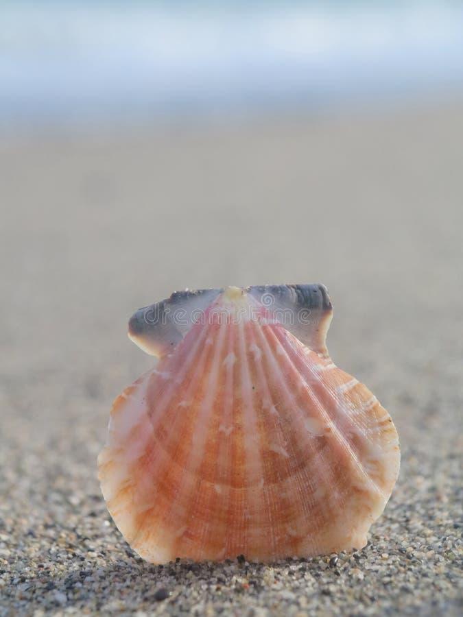 Shell échouent photographie stock libre de droits