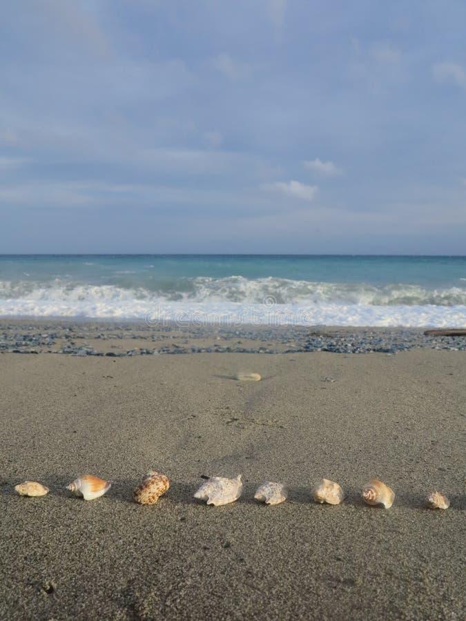 Shell échouent photos libres de droits