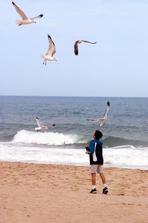Échouez le garçon et les oiseaux photos libres de droits