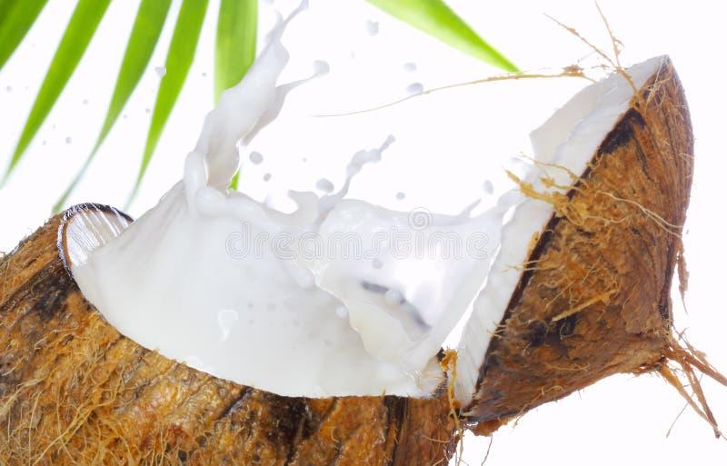 Éclaboussure de noix de coco image stock