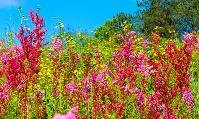 Éclaboussure de Wildflower photos libres de droits