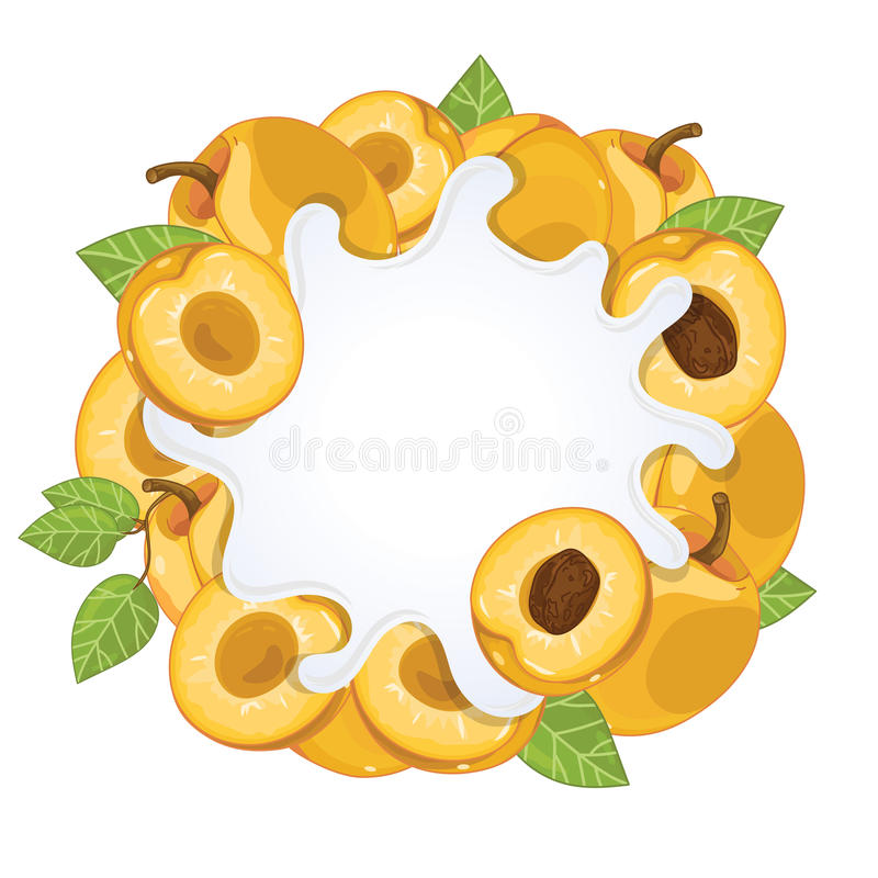 Éclaboussure de yaourt d'isolement avec l'abricot, vecteur illustration de vecteur
