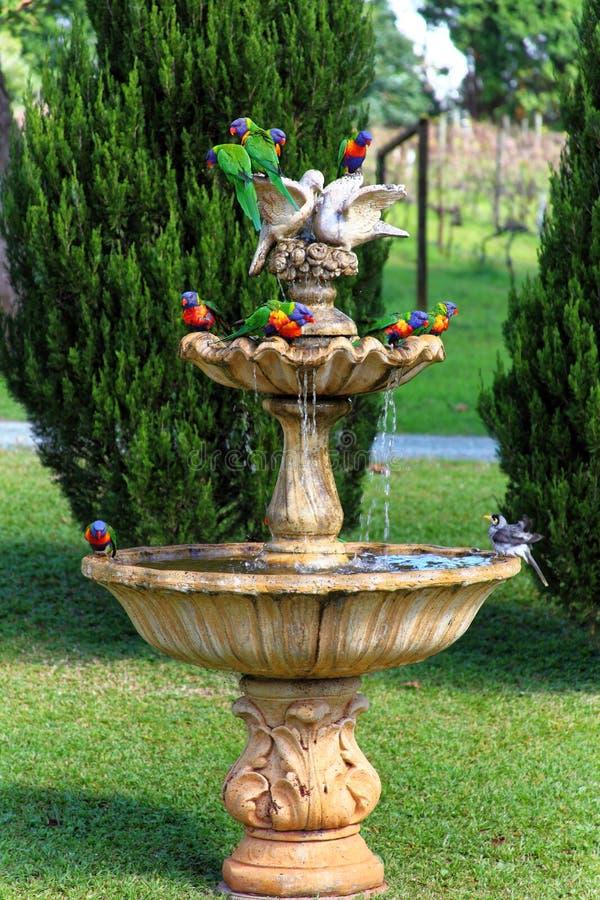 Éclaboussure exotique d'oiseaux dans la fontaine d'eau image libre de droits