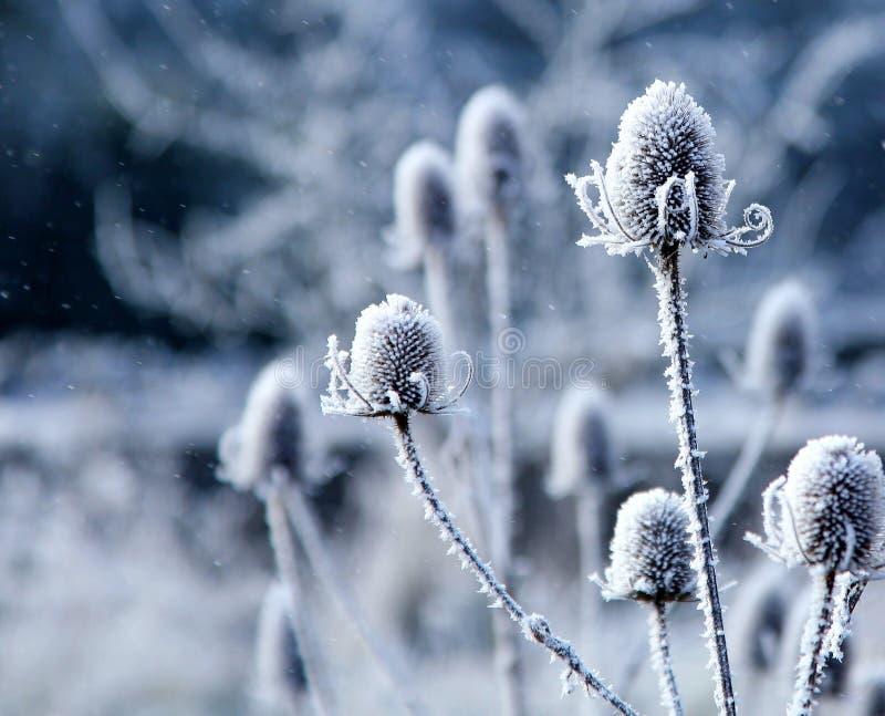 Éclailles en baisse de neige photographie stock