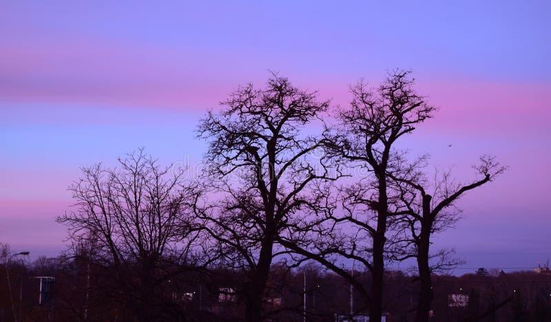 Éclairage de gradient le soir photographie stock