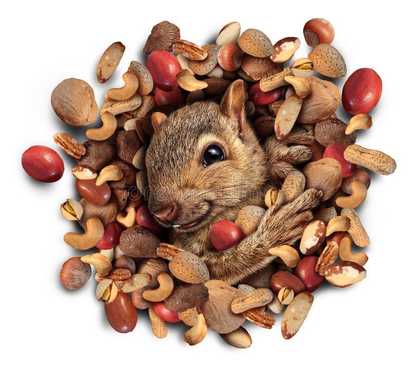 Éclat d'écrou d'écureuil illustration stock