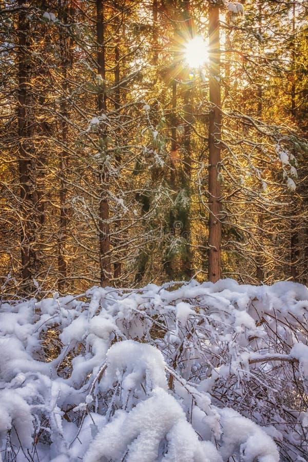 Éclat de l'hiver photos stock