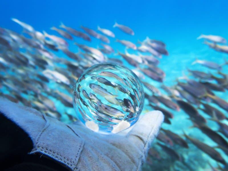 École des poissons capturés dans l'eau du fond de boule en verre photo libre de droits