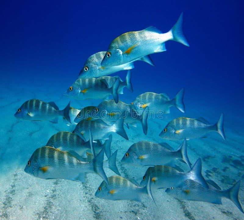 École des poissons de plot photographie stock libre de droits
