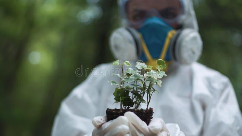 Écologiste anonyme tenant l'échantillon de plante image libre de droits