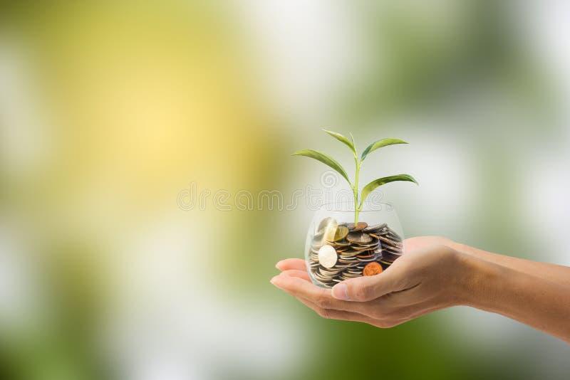 Économie, concept d'investissement Main tenant la pièce de monnaie dans un pot en verre photographie stock libre de droits