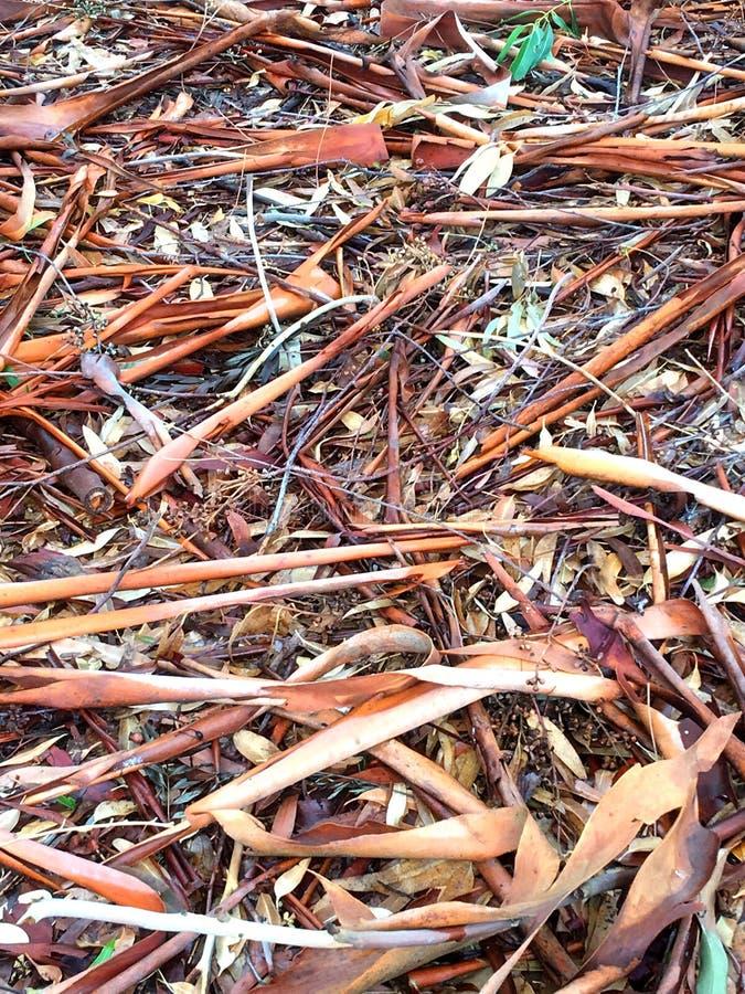 Écorce australienne dispersée au sol photo stock