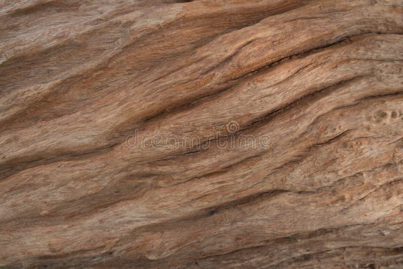 Écorce barrée par arbre image libre de droits