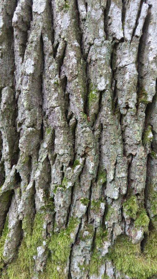 Écorce d'arbre photos stock