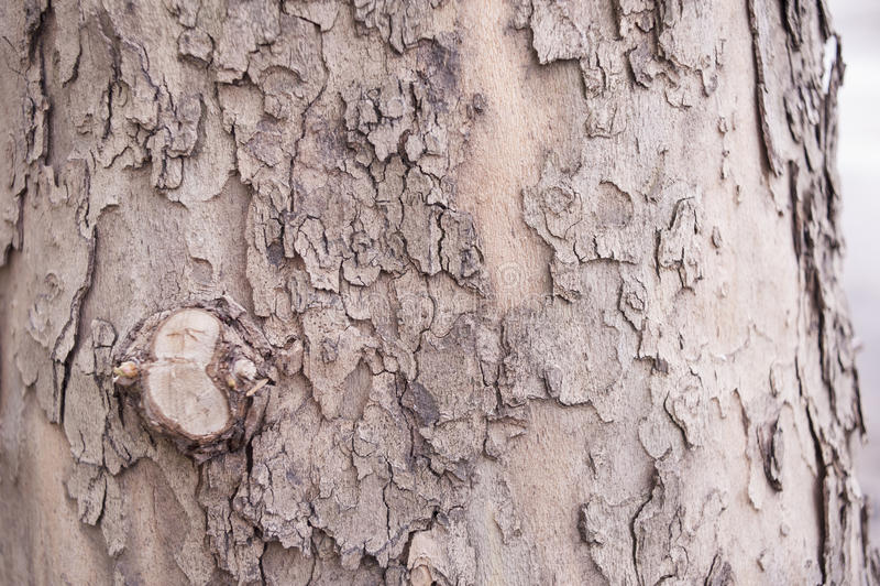 écorce d'arbre brune photos stock