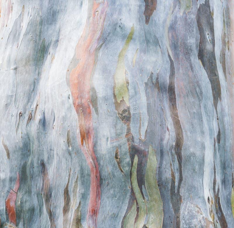 Écorce d'arbre colorée photo libre de droits