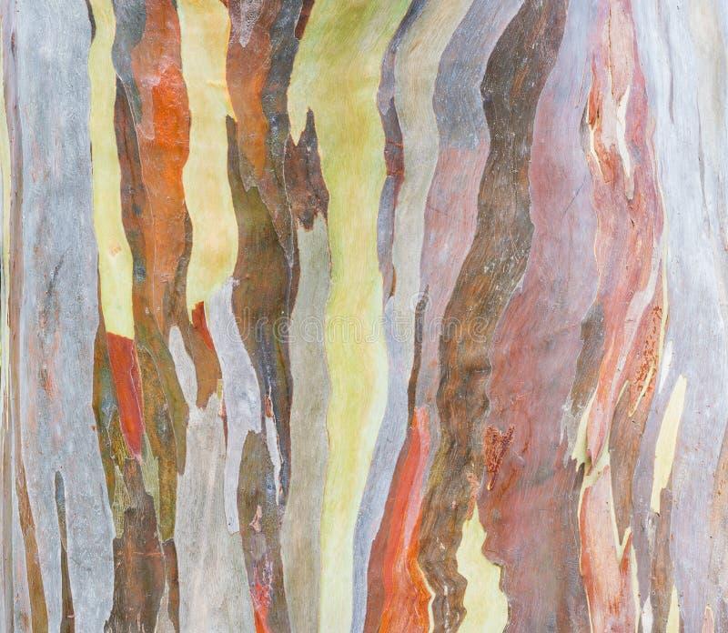 Écorce d'arbre colorée sur la nature photographie stock libre de droits
