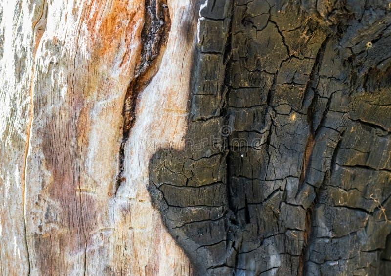 Écorce d'arbre endommagée et brûlée images libres de droits